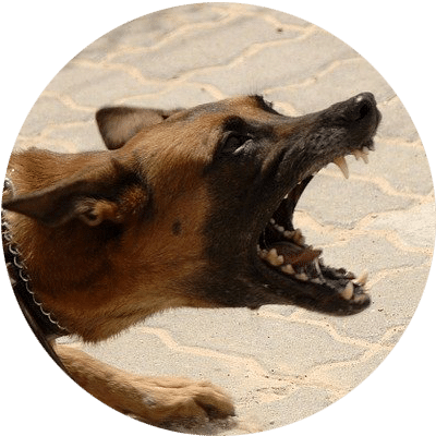 What Are Your Legal Rights After an Apache Junction Dog Bite?