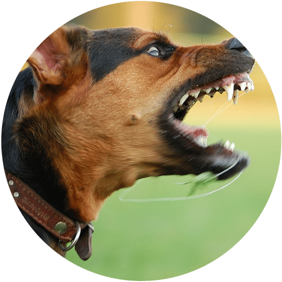 Common Damages & Losses In Dog Bite Injury Lawsuits